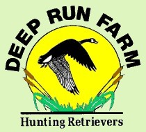 Welcome to Deep Run Farm -  Quality Labrador Retrievers for Performance, Hunting, Conformation, and Companions. Labrador Retriever Puppies bred for outstanding health and temperament.